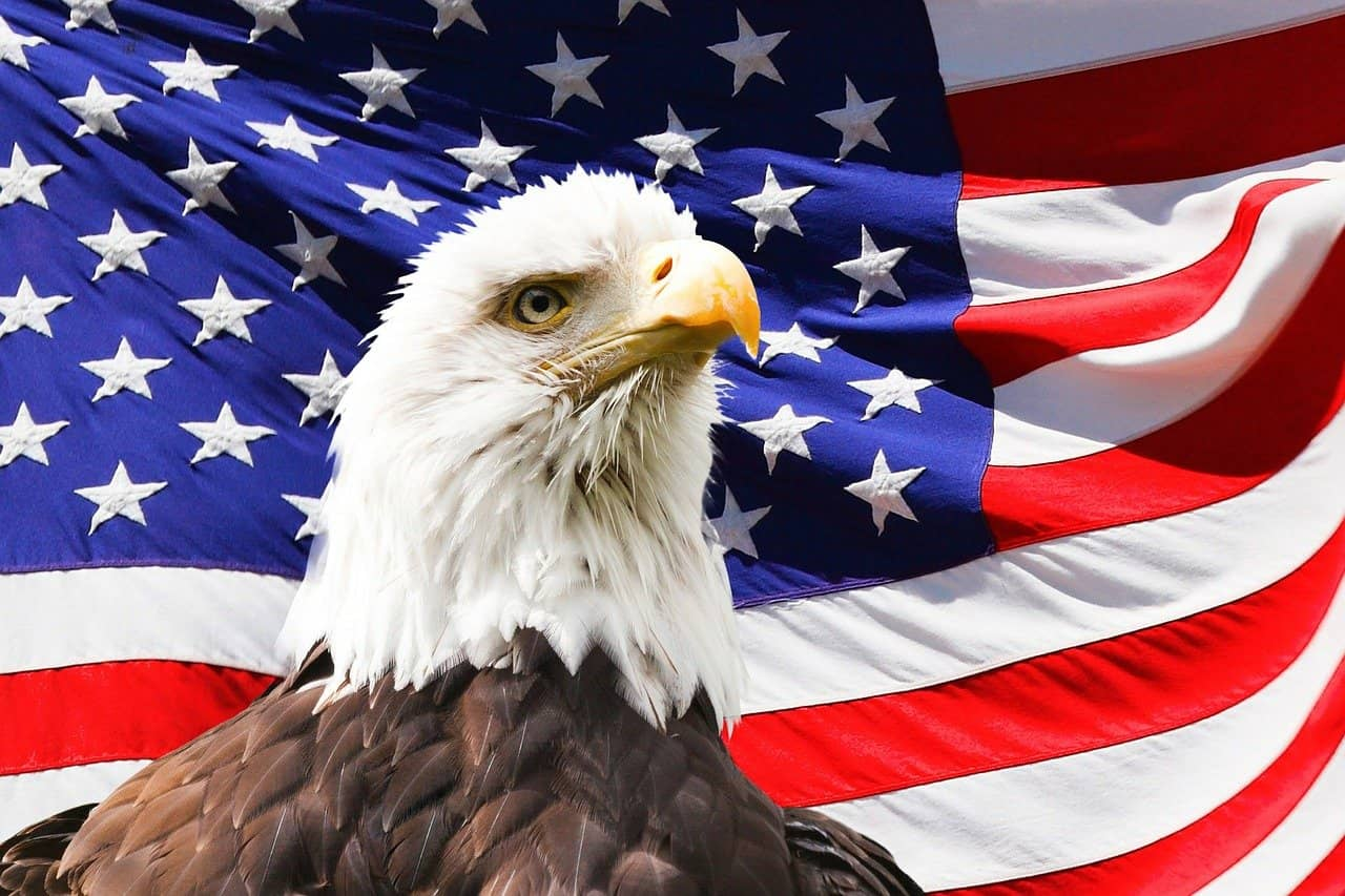 A bald eagle in front of an American flag   Painters near me   Military discount